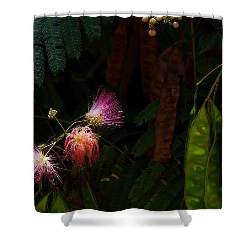 Mimosa Flower Shower Curtain featuring the photograph Mimosa And Peppervine by Jason Politte
