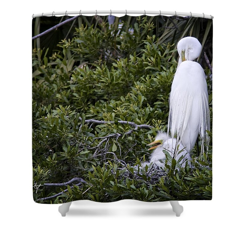 April Shower Curtain featuring the photograph Minding The Kid by Phill Doherty