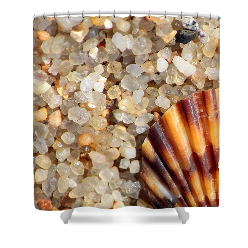 Shell Shells Vacation Vacations vacation At The Beach Beach Beaches Rocks Agates Small Tiny colors Of The Beach Sand Sandy Nature Natural natural Colors beach Cards beach Art Seaside Coastal Shower Curtain featuring the photograph Mini Beach Vacation by Carol Groenen