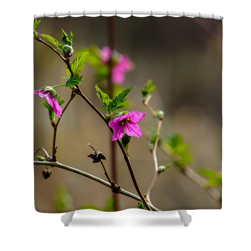 Plants Shower Curtain featuring the photograph Mini Miracles by Tikvah's Hope