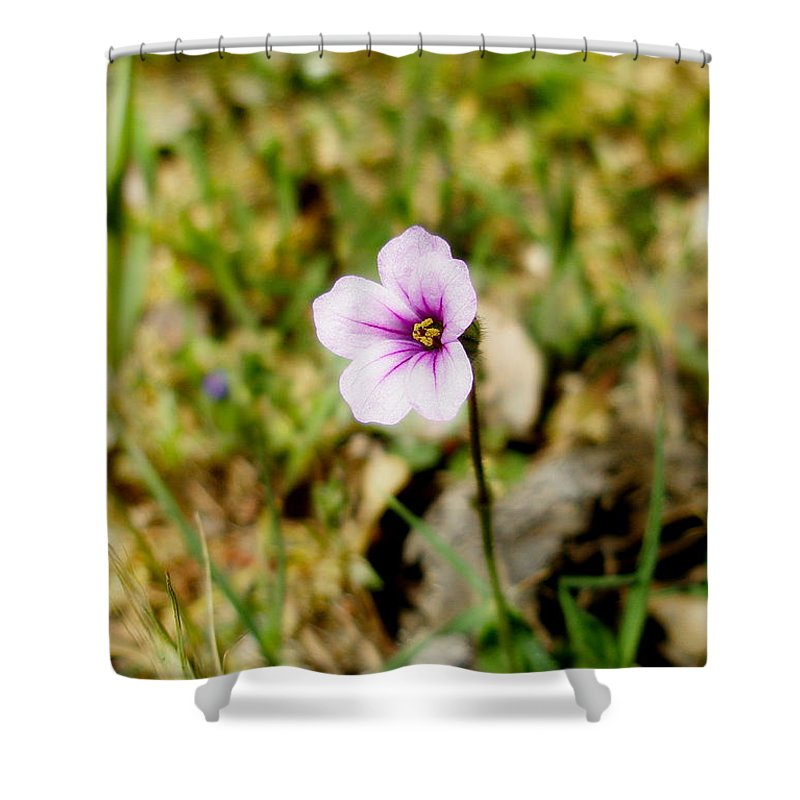 Nature Shower Curtain featuring the photograph Mini Wild Flower by Kevin Bohner