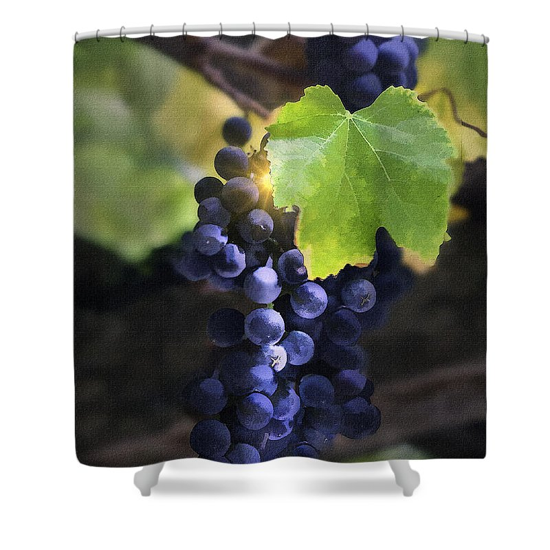 Grapes Shower Curtain featuring the digital art Mission Grapes II by Sharon Foster