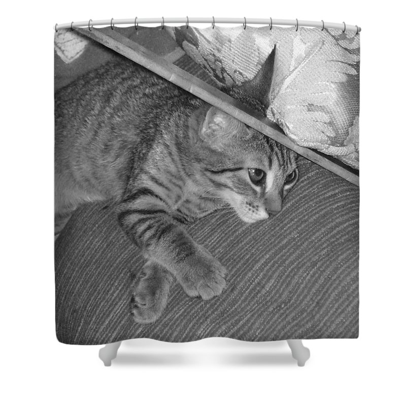 Kitten Shower Curtain featuring the photograph Model Kitten by Pharris Art