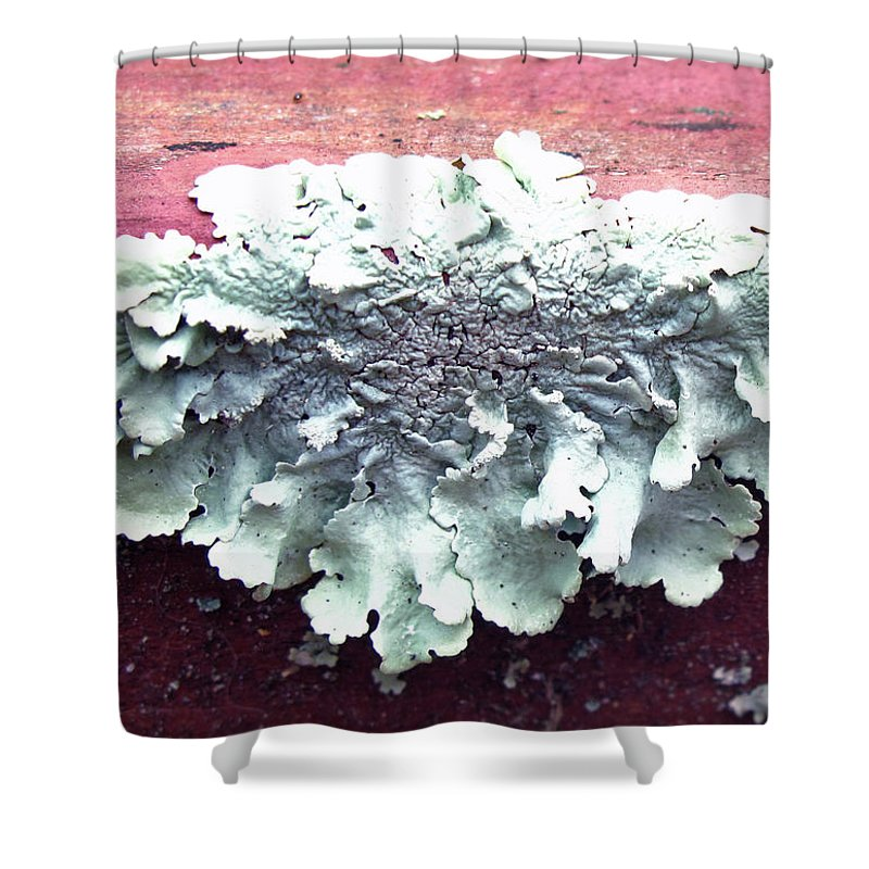 Floral Shower Curtain featuring the photograph Mold Portrait by Barbara McDevitt