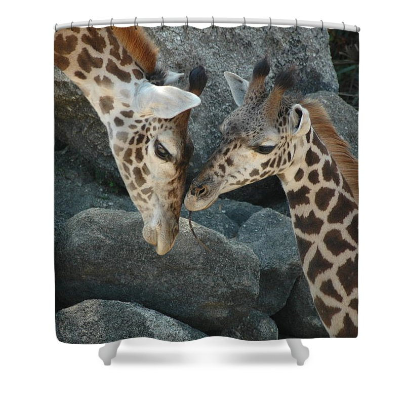 Giraffes Shower Curtain featuring the photograph Mom And Baby Giraffe by Sheri Heckenlaible