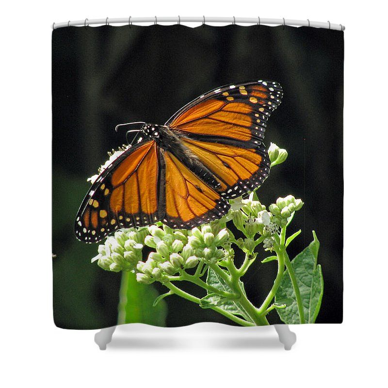 Butterfly Shower Curtain featuring the photograph Monarch Butterfly 60 by Pamela Critchlow