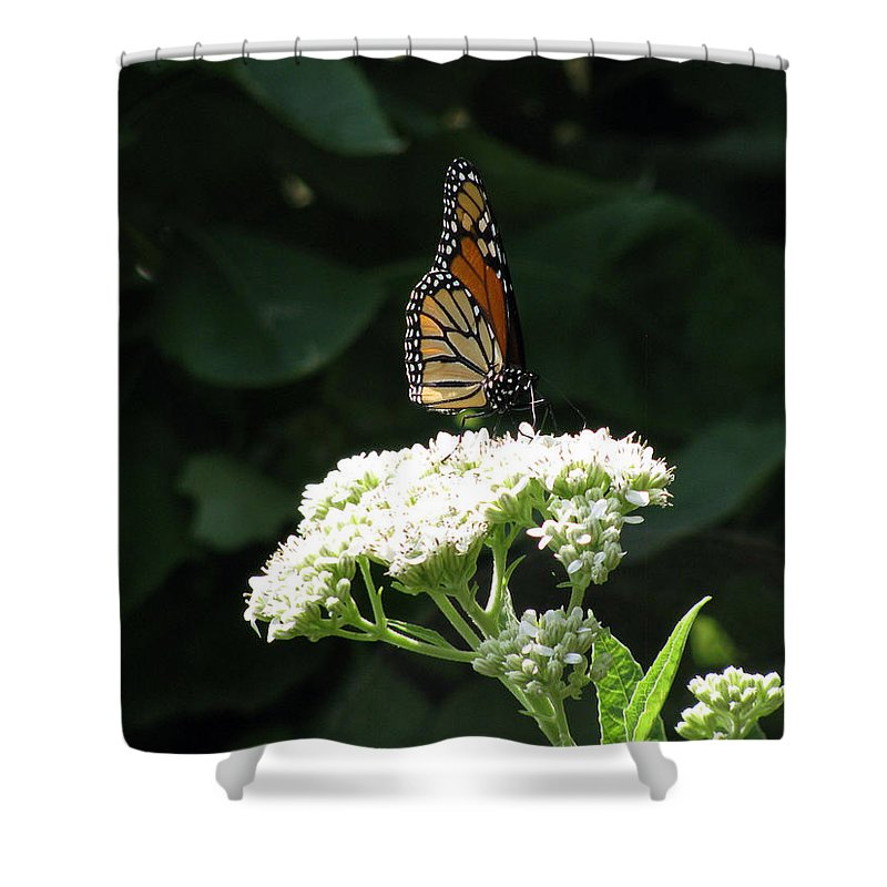 Butterfly Shower Curtain featuring the photograph Monarch Butterfly 71 by Pamela Critchlow