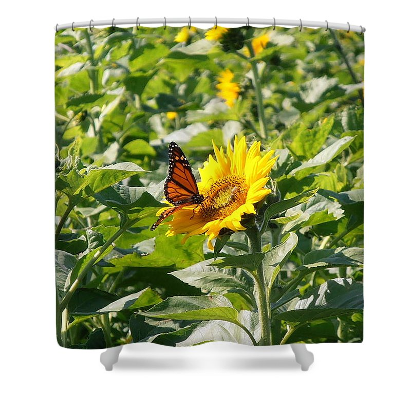 Monarch Shower Curtain featuring the photograph Monarch Butterfly And Guest by Kimberly Perry