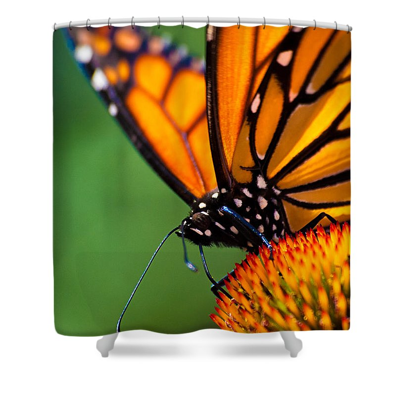 Monarch Shower Curtain featuring the photograph Monarch Butterfly Headshot by Bob Orsillo