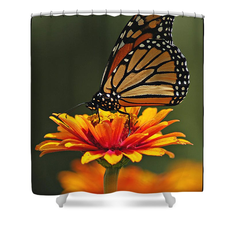 Nature Shower Curtain featuring the photograph Monarch by Gene Tatroe