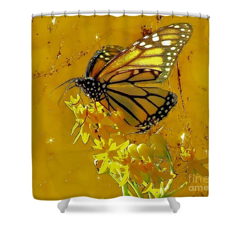 Monarch Butterfly Shower Curtain featuring the photograph Monarch On Gold by Janette Boyd