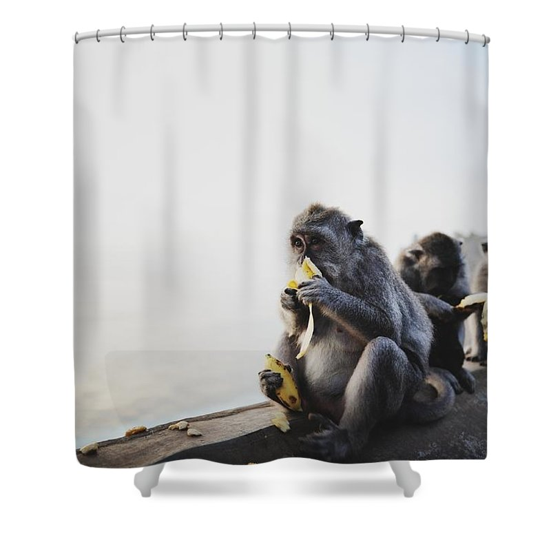 In A Row Shower Curtain featuring the photograph Monkeys Eating Bananas by Carlina Teteris
