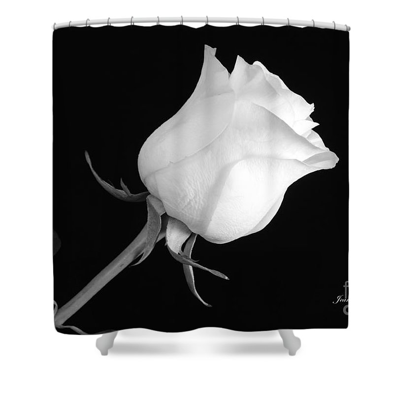 Monochrome White Rose Shower Curtain featuring the photograph Monochrome White Rose by Jeannie Rhode
