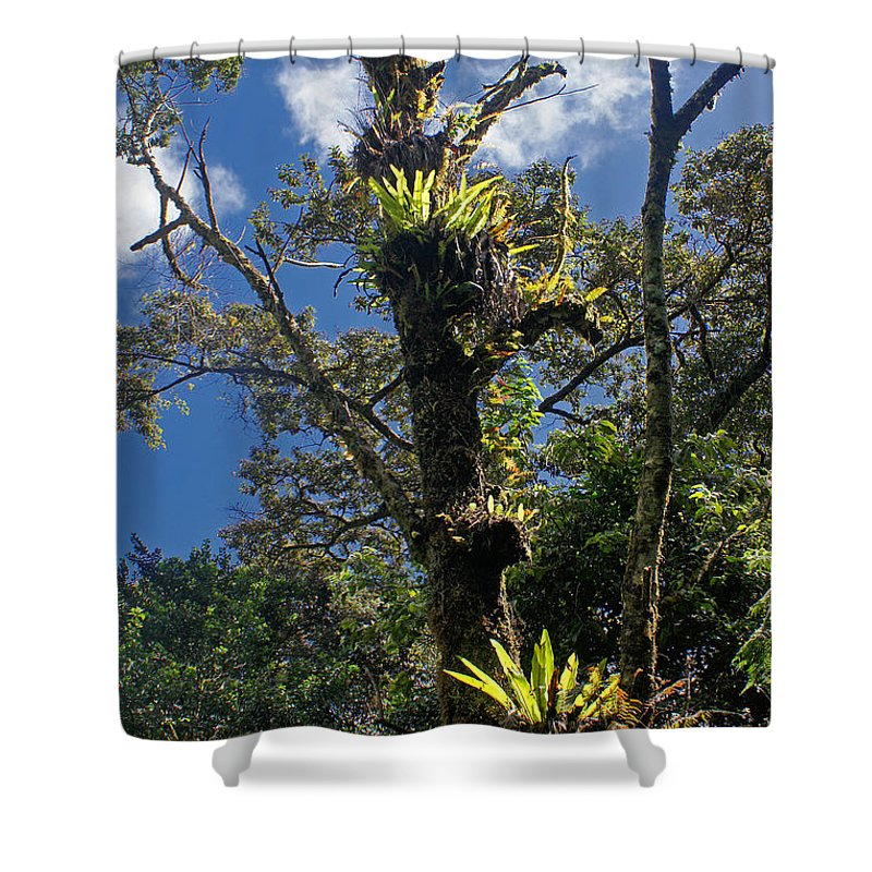 Nature Shower Curtain featuring the photograph Montagne D'ambre National Park Madagascar 4 by Rudi Prott
