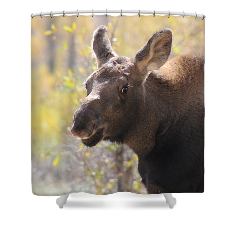 Moose Shower Curtain featuring the photograph Moose Who Lost His Mother by G Berry