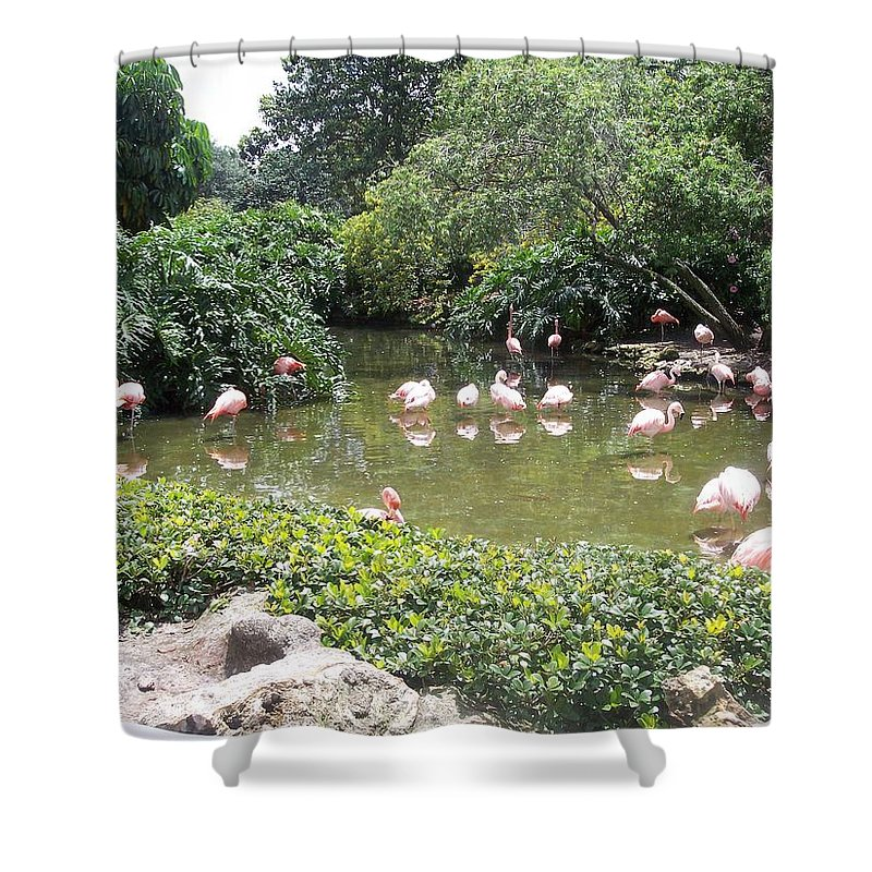 Flamingos Shower Curtain featuring the photograph More Pink Flamingos by Pharris Art