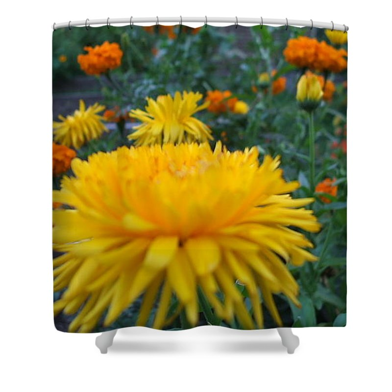 Floral Shower Curtain featuring the photograph Morning by Jo Dawkins