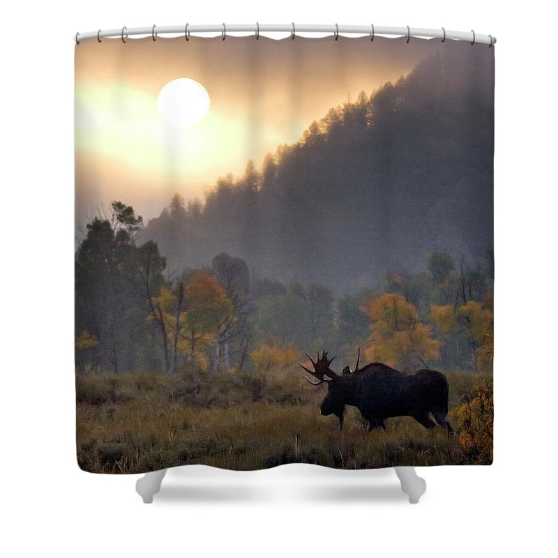 Moose Shower Curtain featuring the photograph Morning Moose by Max Waugh