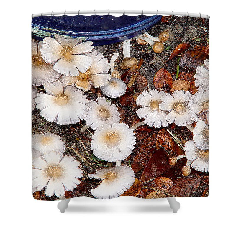 Texas Shower Curtain featuring the photograph Morning Mushrooms by Erich Grant