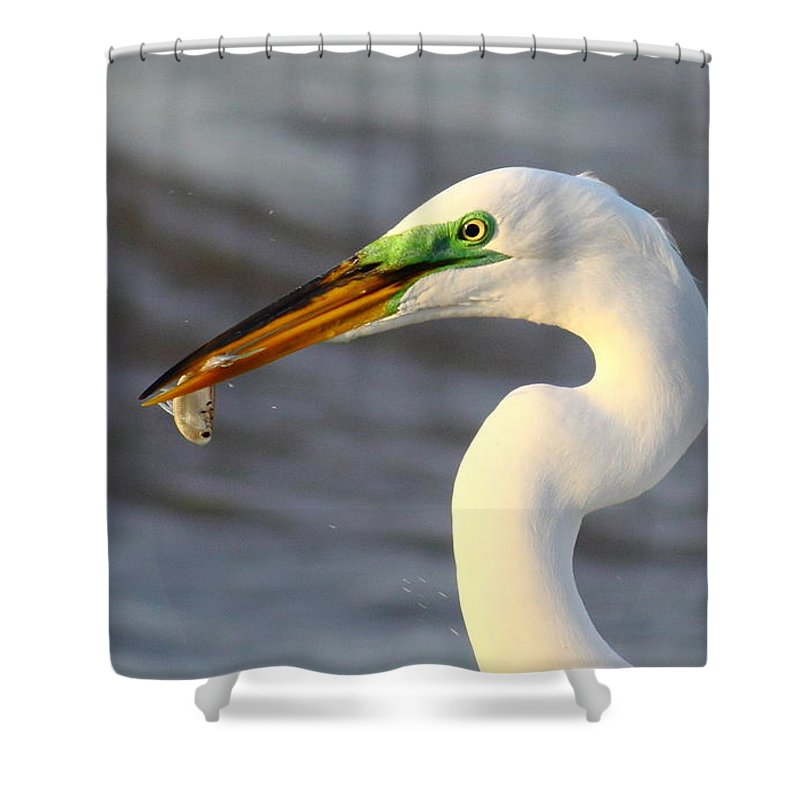 Animal Shower Curtain featuring the photograph Morning's Catch by Robert Frederick