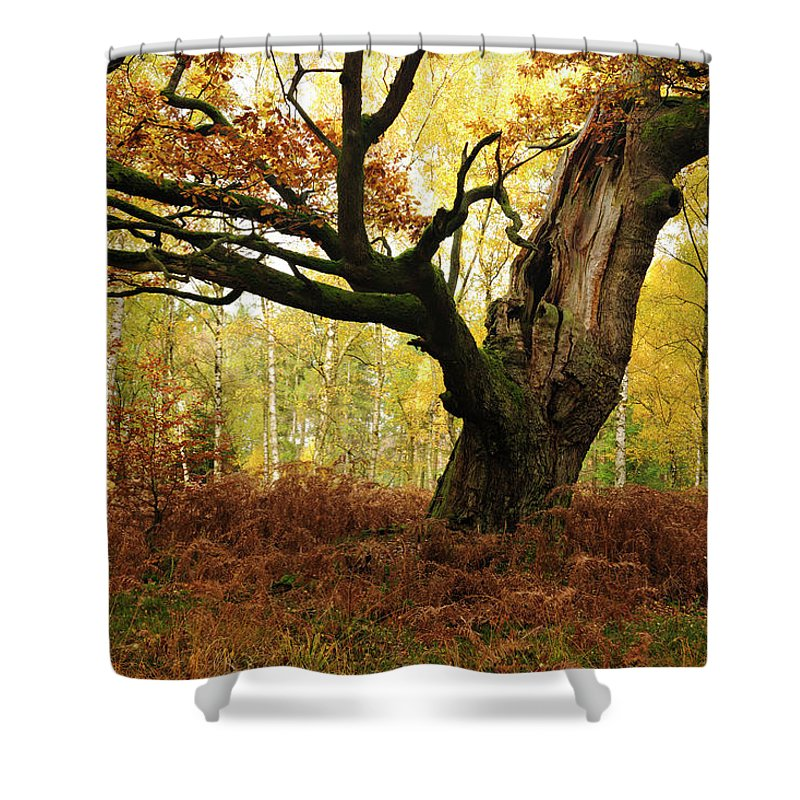 Aging Process Shower Curtain featuring the photograph Moss Covered Ancient Hollow Oak Tree In by Avtg