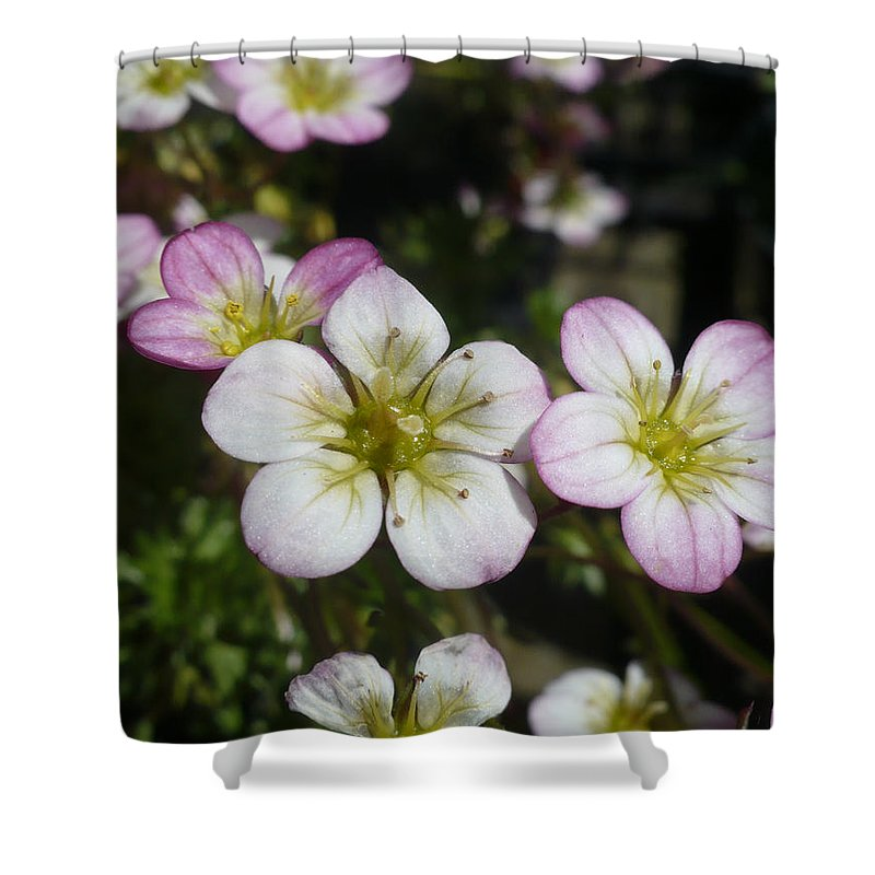 Mossy Shower Curtain featuring the photograph Mossy Saxifrage Flower Carpet by Nicki Bennett