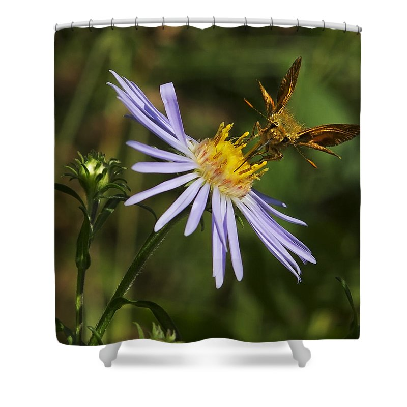 Nature Shower Curtain featuring the photograph Moth Feeding On Aster Dragon by Belinda Greb