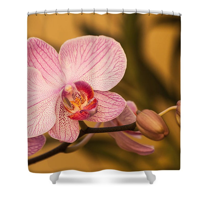 Blossom Shower Curtain featuring the photograph Moth Orchid by Ed Gleichman