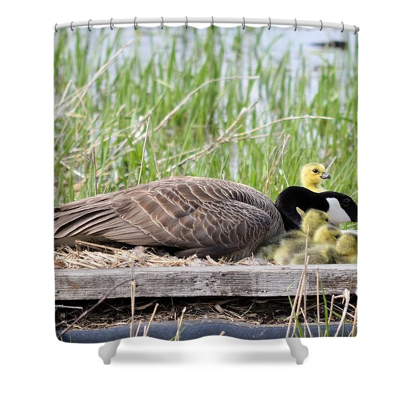 Goose Shower Curtain featuring the photograph Mother Goose 2 by Bonfire Photography