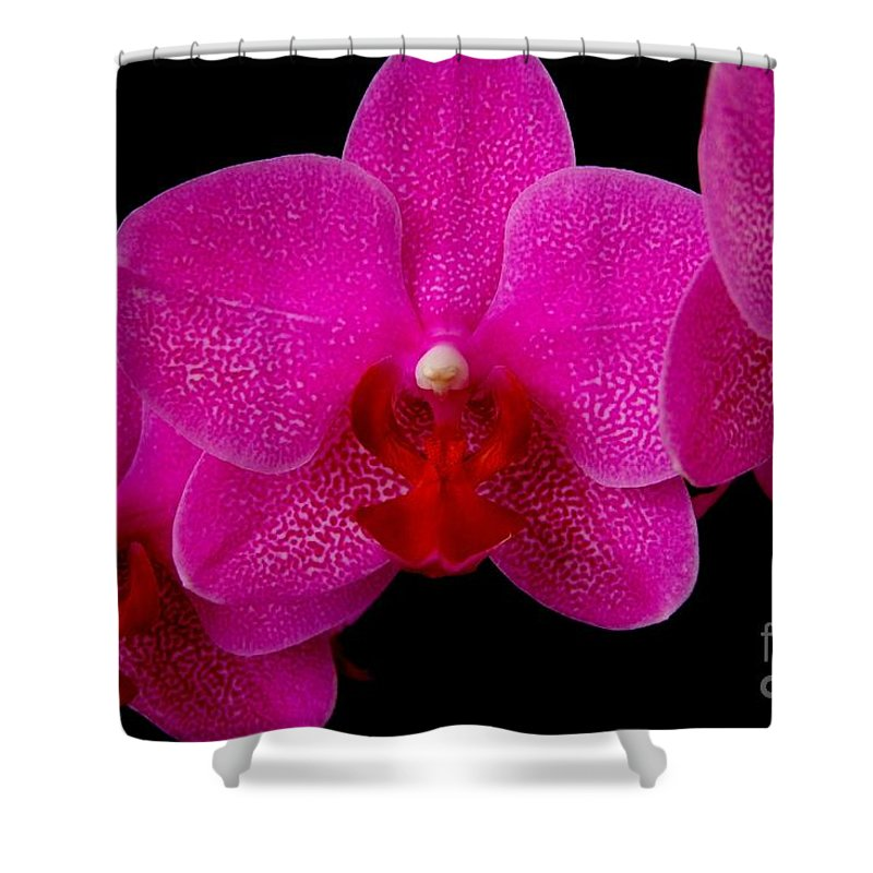 Pink Shower Curtain featuring the photograph Mottled Orchid 8 by Mary Deal