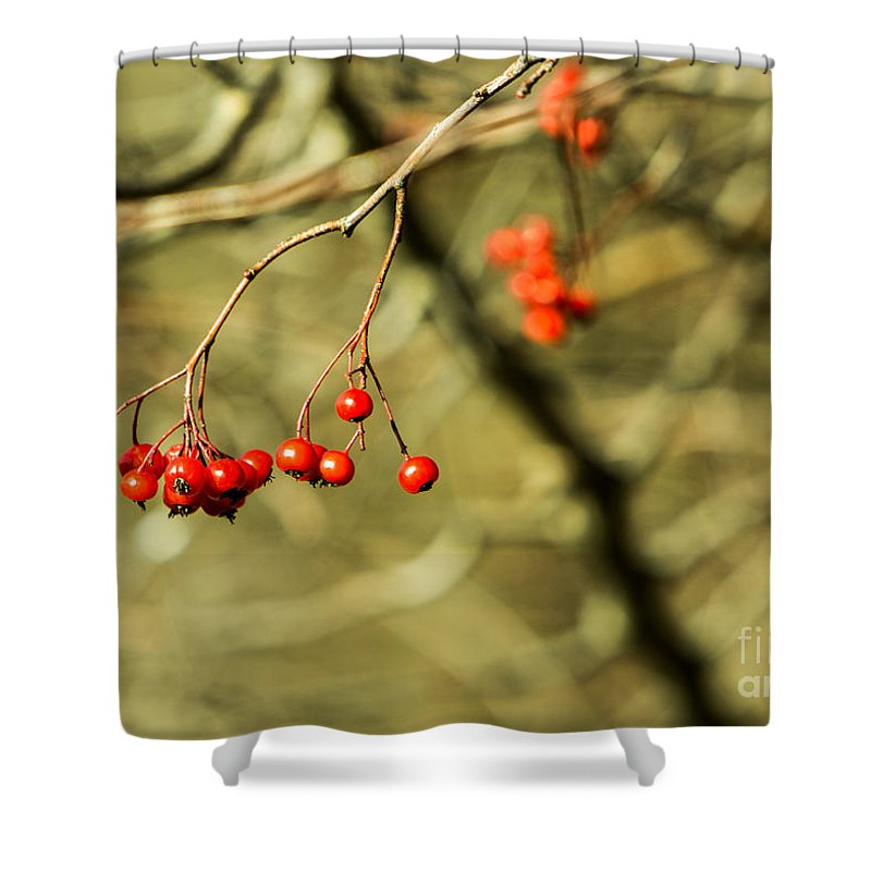Mountain Shower Curtain featuring the photograph Mountain Ash by Brad Marzolf Photography
