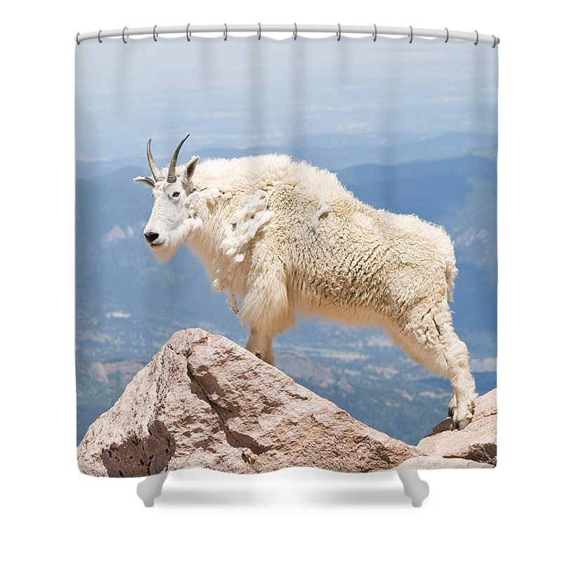 Mountain Goat Shower Curtain featuring the photograph Mountain Goat Up High by Jaci Harmsen