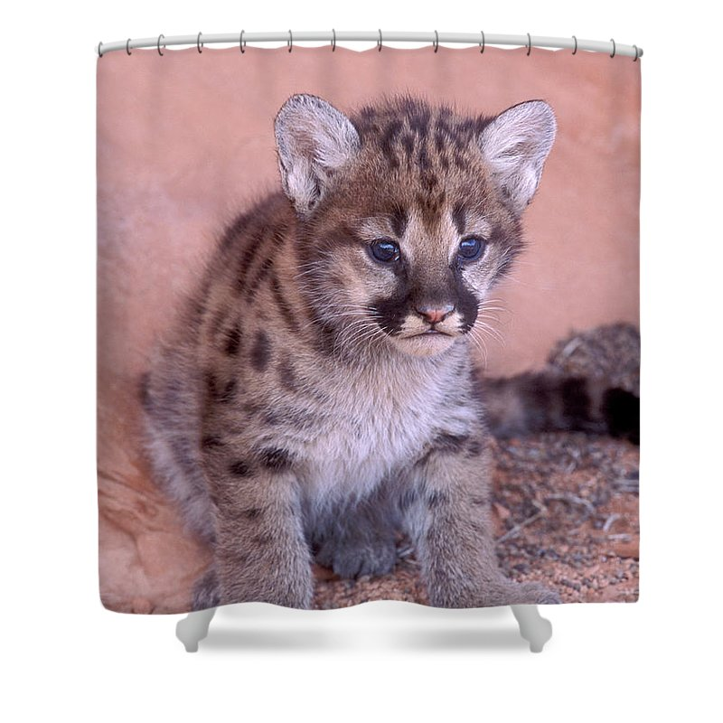 Wildlife Shower Curtain featuring the photograph Mountain Lion Cub by Sandra Bronstein