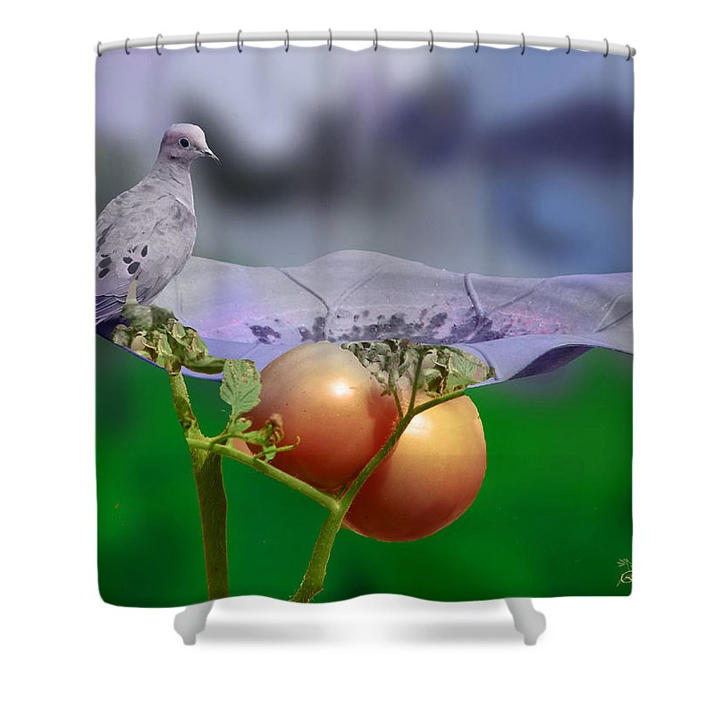 Bird Shower Curtain featuring the photograph Mourning Dove by Ericamaxine Price