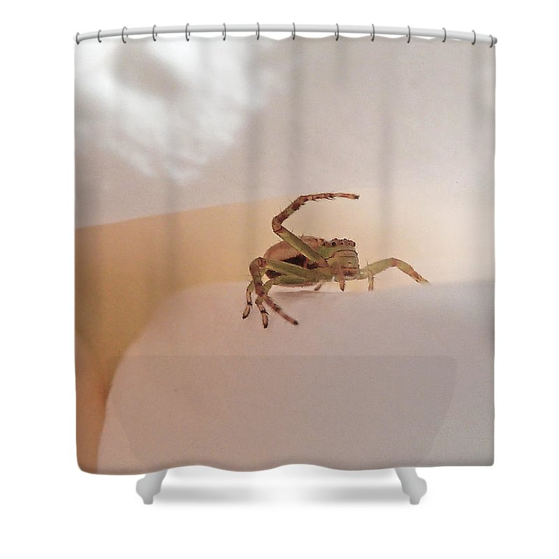Spider Shower Curtain featuring the photograph Move Along Please by Steve Taylor