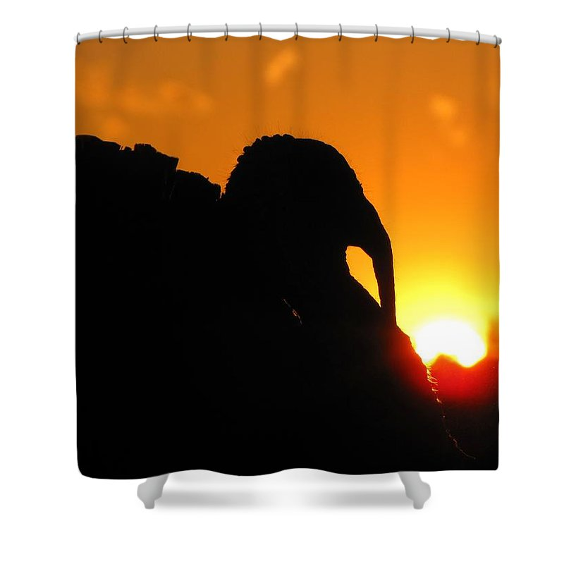 Nature Shower Curtain featuring the photograph Mr Gobbles At Sunset by Matt Taylor