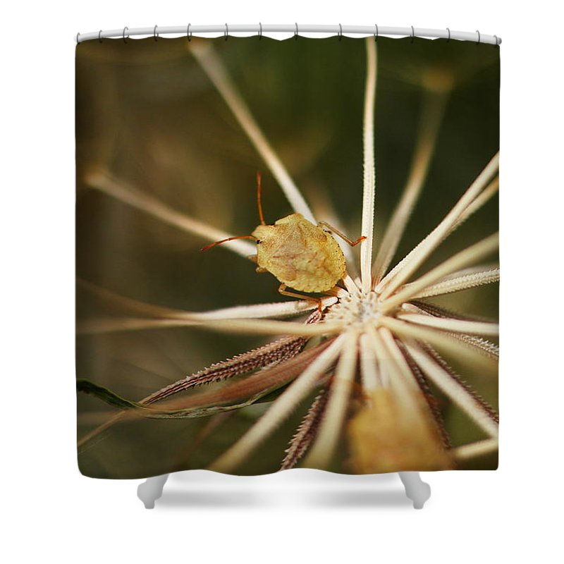 Bugs Shower Curtain Featuring The Photograph Mr Potato Bug By Jeff Swan