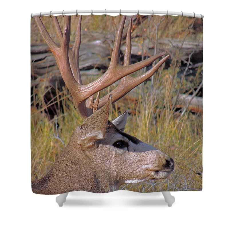 Deer Shower Curtain featuring the photograph Mule Deer by Lynn Sprowl