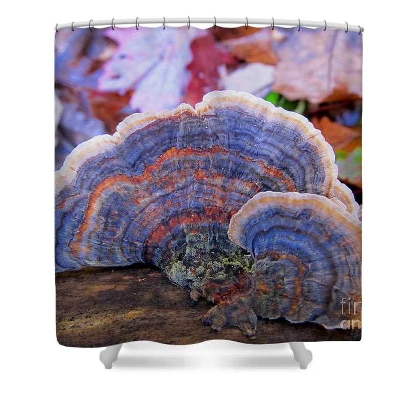 Multicolor Mushrooms Blue Mushrooms Rainbow Polypores Colorful Mushrooms Photographs Natural Designs In Nature Pennsylvania Forest Fungi American Mushrooms Blue Bracket Fungi Images Shelf Fungi Images Organic Art Nature Photography Mid Atlantic Mushrooms Appalachian Mountain Mushrooms Appalachian Fungi Appalachian Biodiversity Woodland Wonders Natural Science Educational Resources Protect Biodiversity Preserve Oldgrowth Forest Protect Water Quality Stop Sprawl North American Biodiversity Shower Curtain featuring the photograph Multicolor Mushroom by Joshua Bales