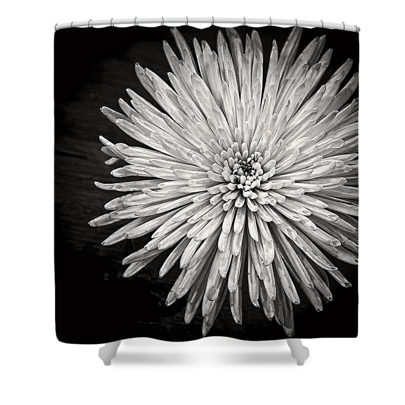 Flower Shower Curtain featuring the photograph Mum's The Word by Kristi Swift