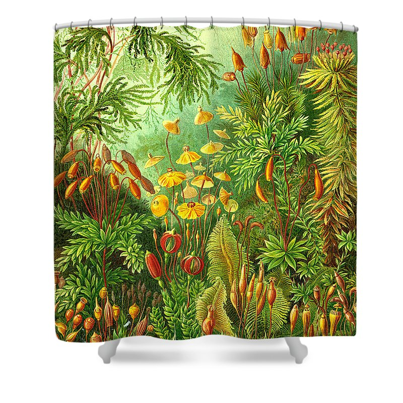 Muscinae Shower Curtain featuring the digital art Muscinae by Unknown