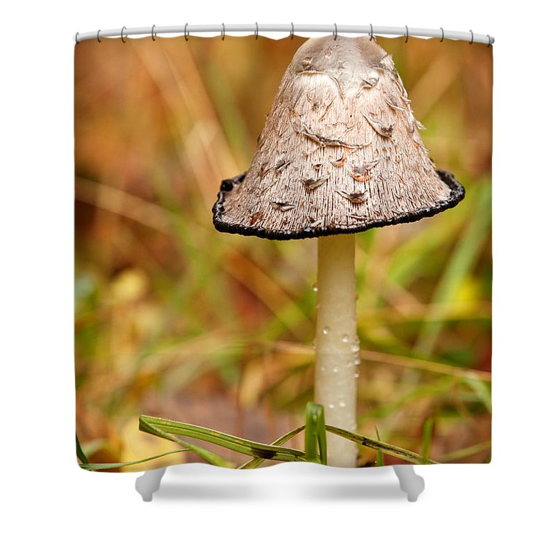One Shower Curtain featuring the photograph Shaggy Mane Mushroom by Sharon Dominick
