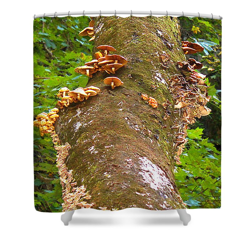 Tree Shower Curtain featuring the photograph Mushroom's Kingdom by Milena Ilieva