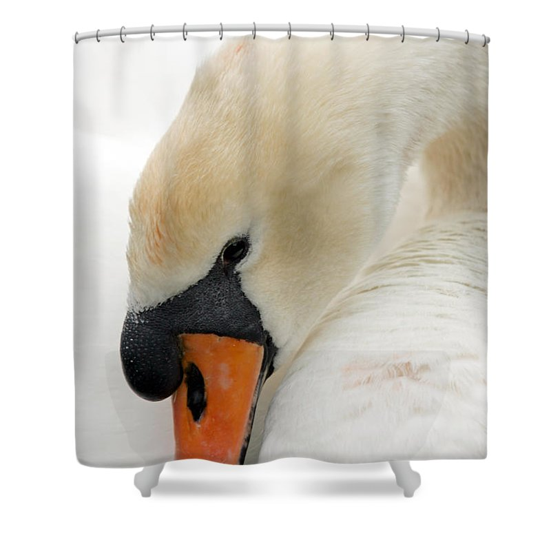 Cygnus Color Shower Curtain featuring the photograph Mute Swan Fine Art Photograph by John Harmon