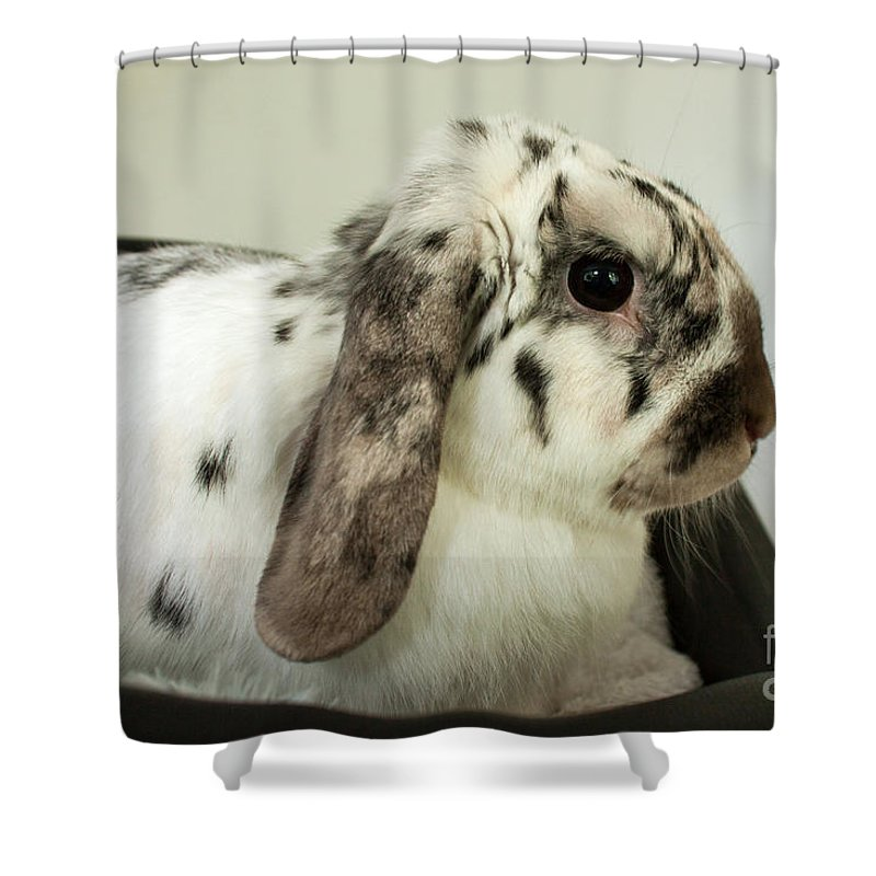 Rabbit Shower Curtain featuring the photograph My Friend Bunny by Terri Waters
