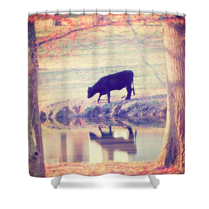 Black Cow Shower Curtain featuring the photograph My Own Paradise by Amy Tyler