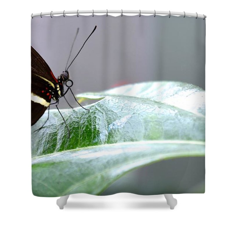Butterfly Shower Curtain featuring the photograph My Pretty Butterfly by Carla Carson
