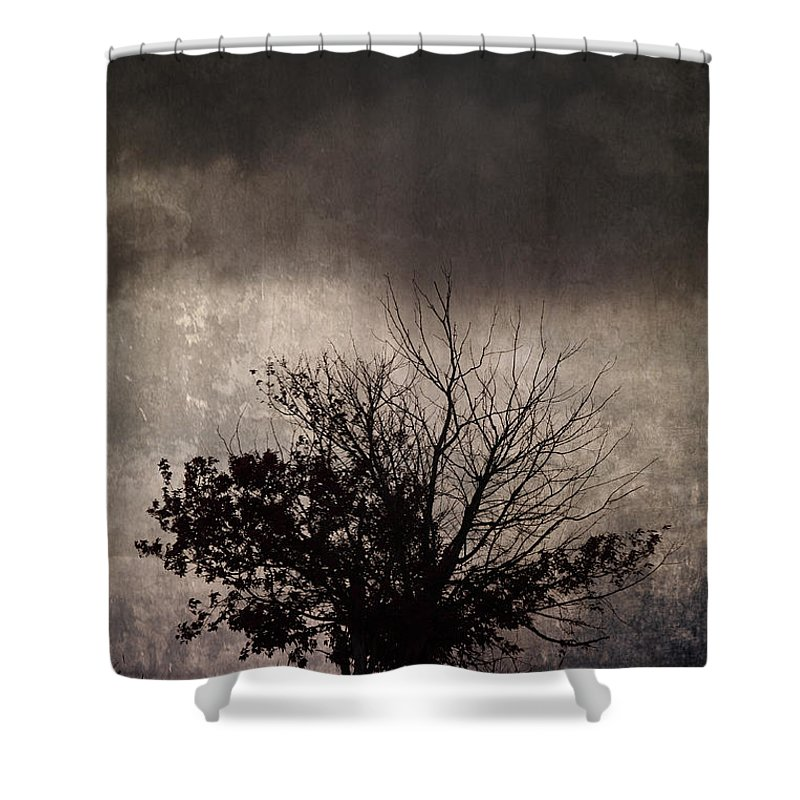 Trees Shower Curtain featuring the photograph My Thirsty Side by The Artist Project