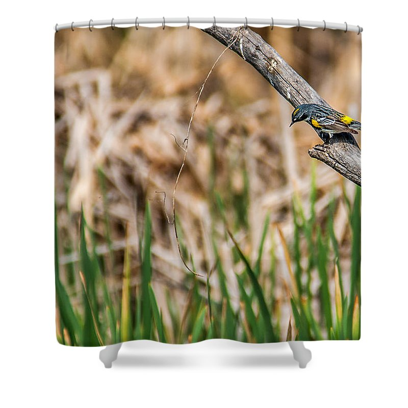 Heronheaven Shower Curtain featuring the photograph Myrtle Warbler Colors by Edward Peterson