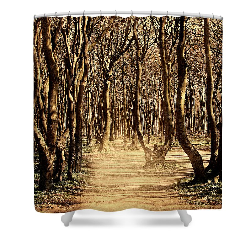 Forest Shower Curtain featuring the photograph Mysterious Forest by Heike Hultsch